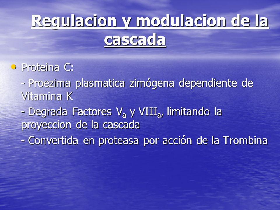 Regulacion y modulacion de la cascada