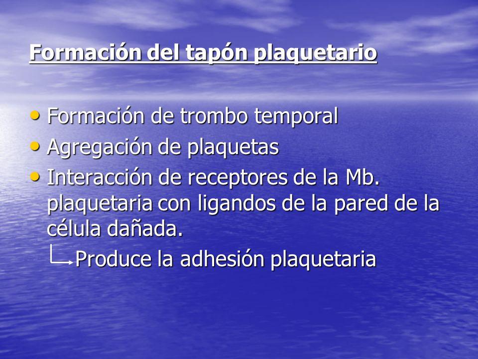 Formación del tapón plaquetario