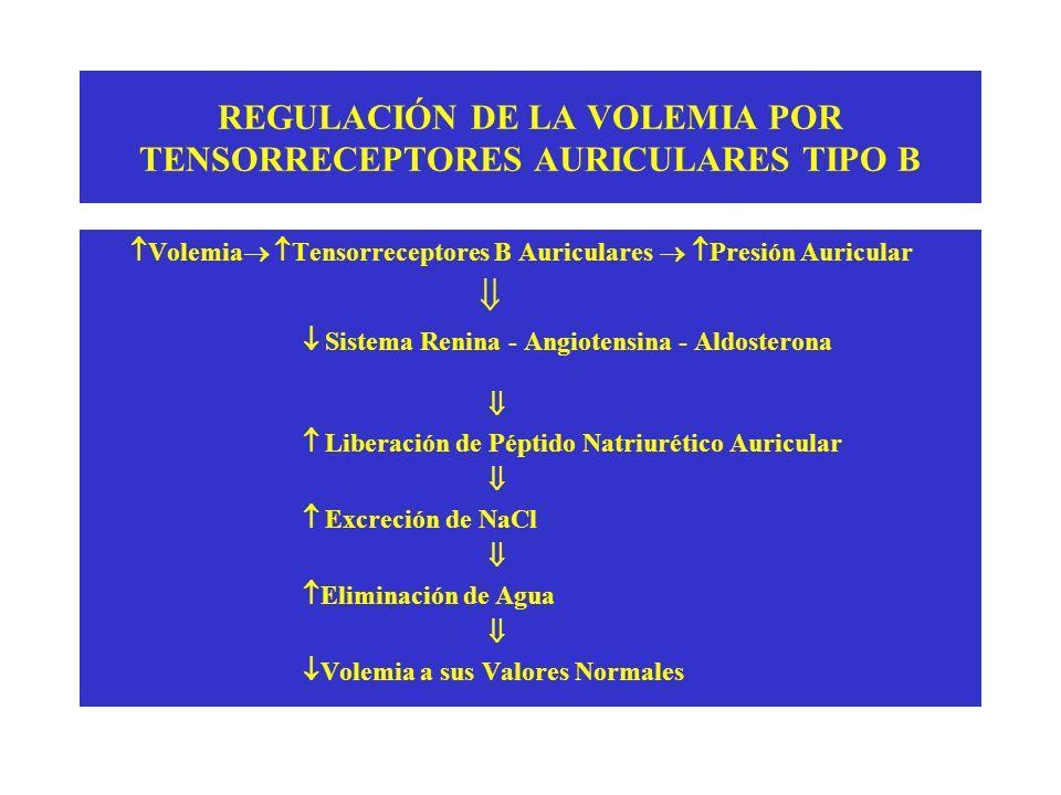 REGULACIÓN DE LA VOLEMIA POR TENSORRECEPTORES AURICULARES TIPO B