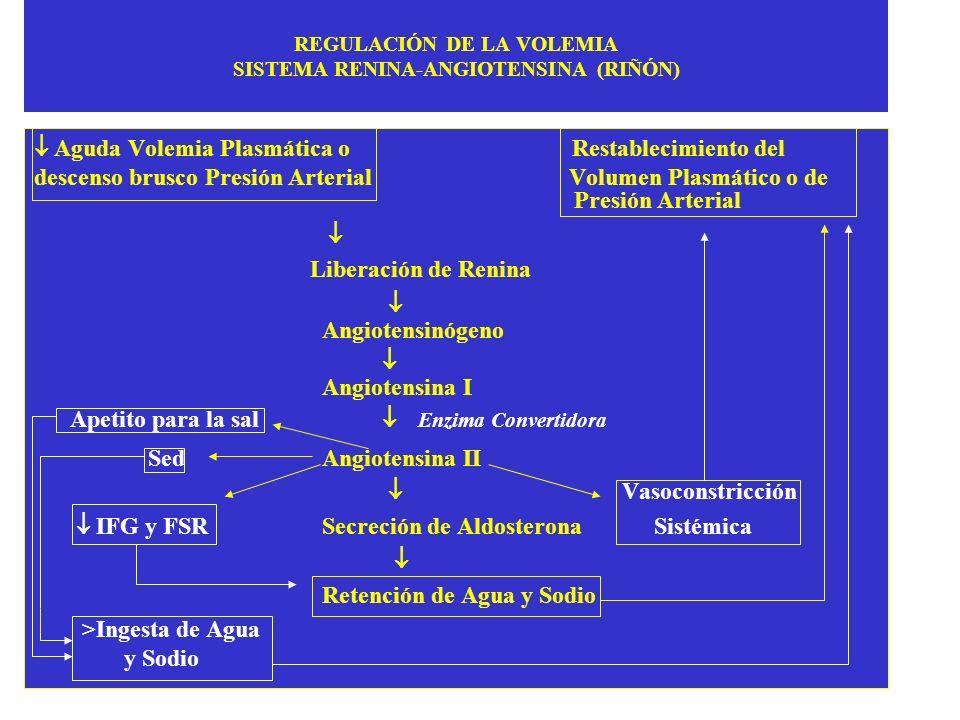 REGULACIÓN DE LA VOLEMIA SISTEMA RENINA-ANGIOTENSINA (RIÑÓN)