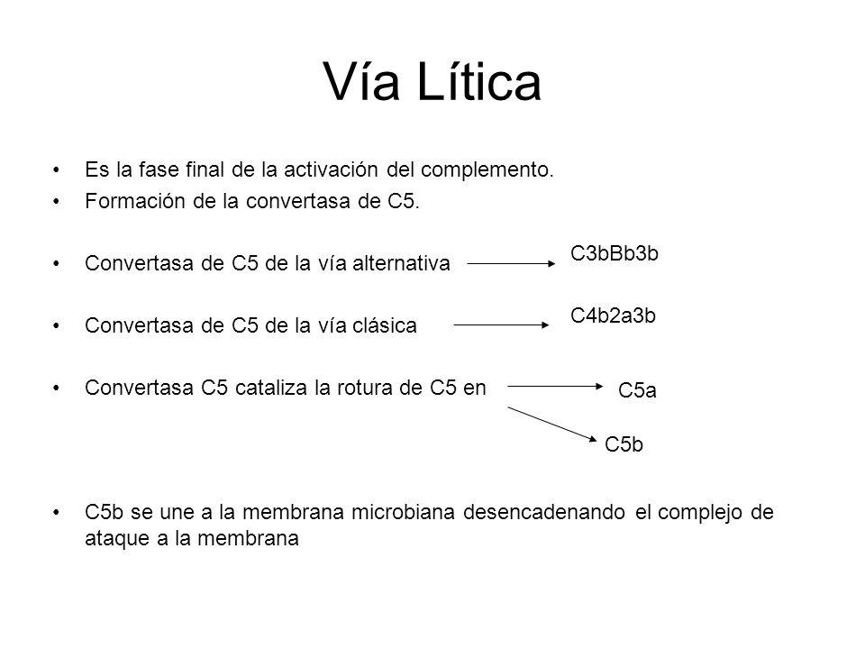 Vía Lítica Es la fase final de la activación del complemento.