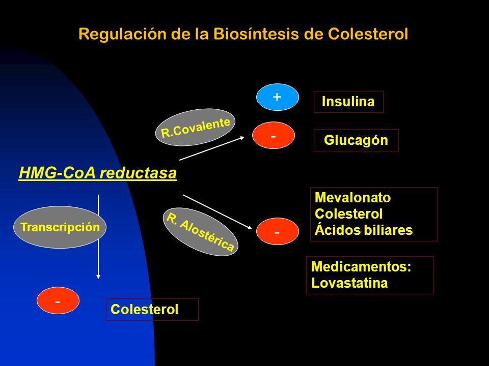 Regulación de la Biosíntesis de Colesterol