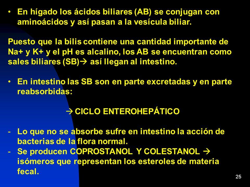 En hígado los ácidos biliares (AB) se conjugan con aminoácidos y así pasan a la vesícula biliar.