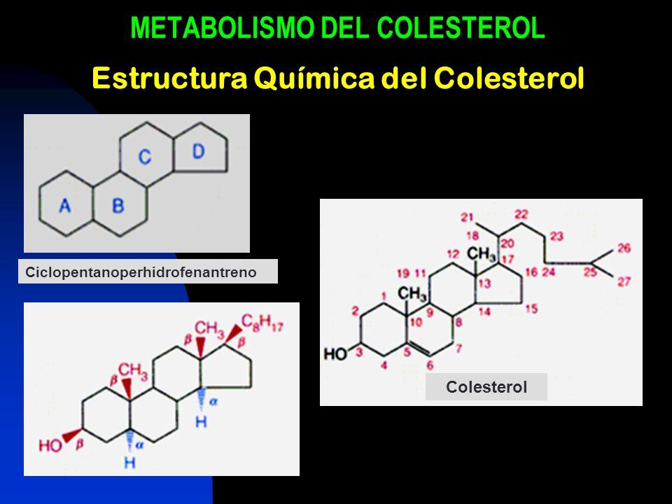 METABOLISMO DEL COLESTEROL Estructura Química del Colesterol