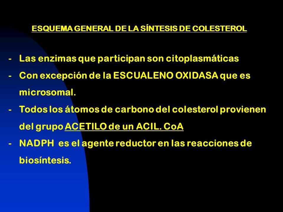 ESQUEMA GENERAL DE LA SÍNTESIS DE COLESTEROL