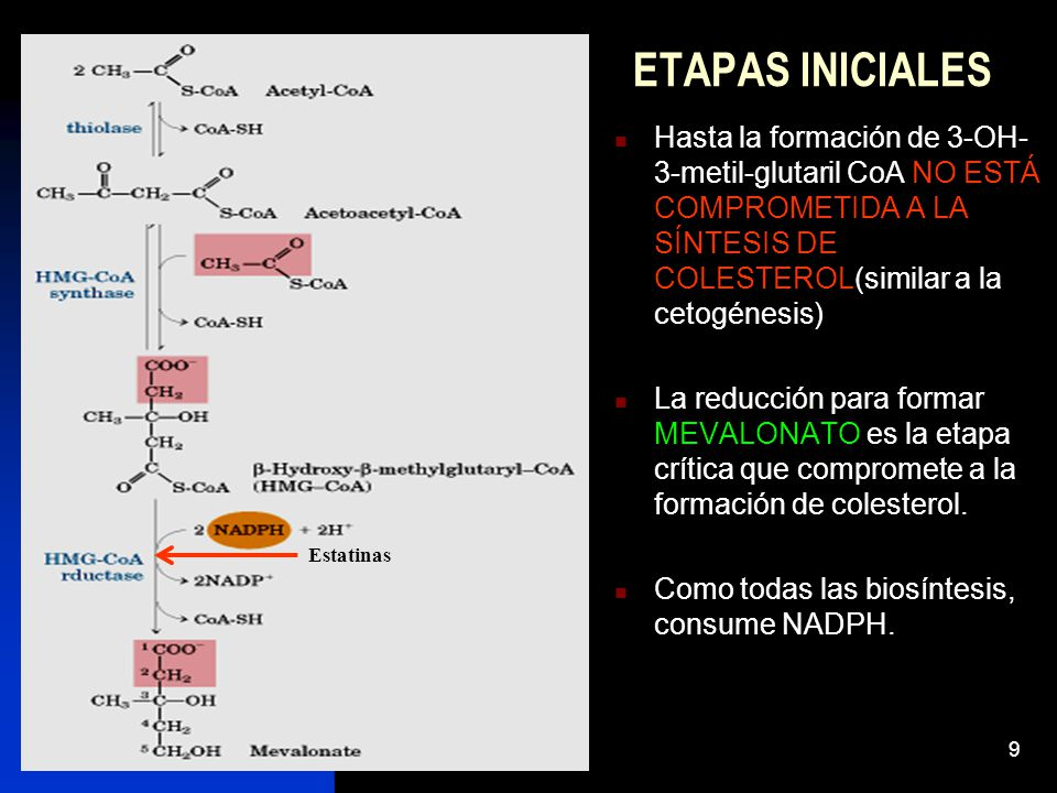 ETAPAS INICIALES Hasta la formación de 3-OH-3-metil-glutaril CoA NO ESTÁ COMPROMETIDA A LA SÍNTESIS DE COLESTEROL(similar a la cetogénesis)