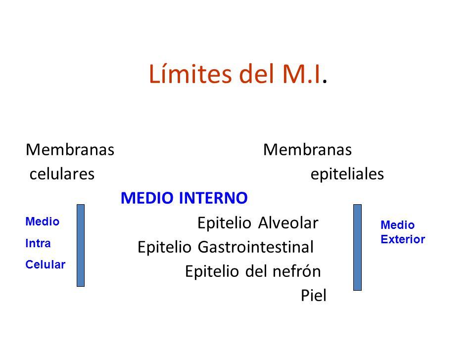 Límites del M.I. Membranas Membranas celulares epiteliales