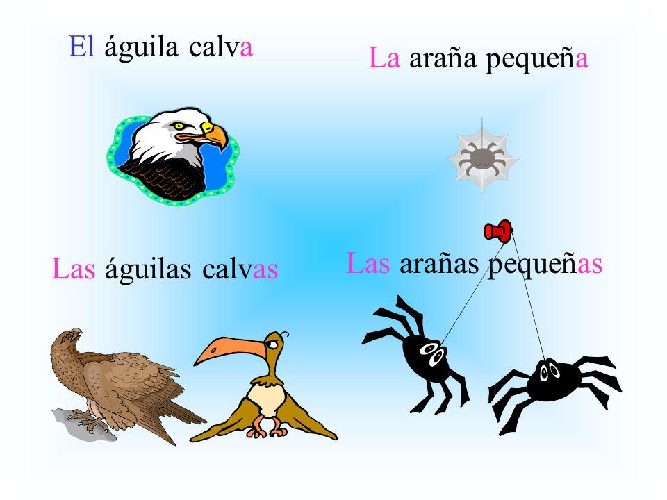 El águila calva La araña pequeña Las arañas pequeñas Las águilas calvas