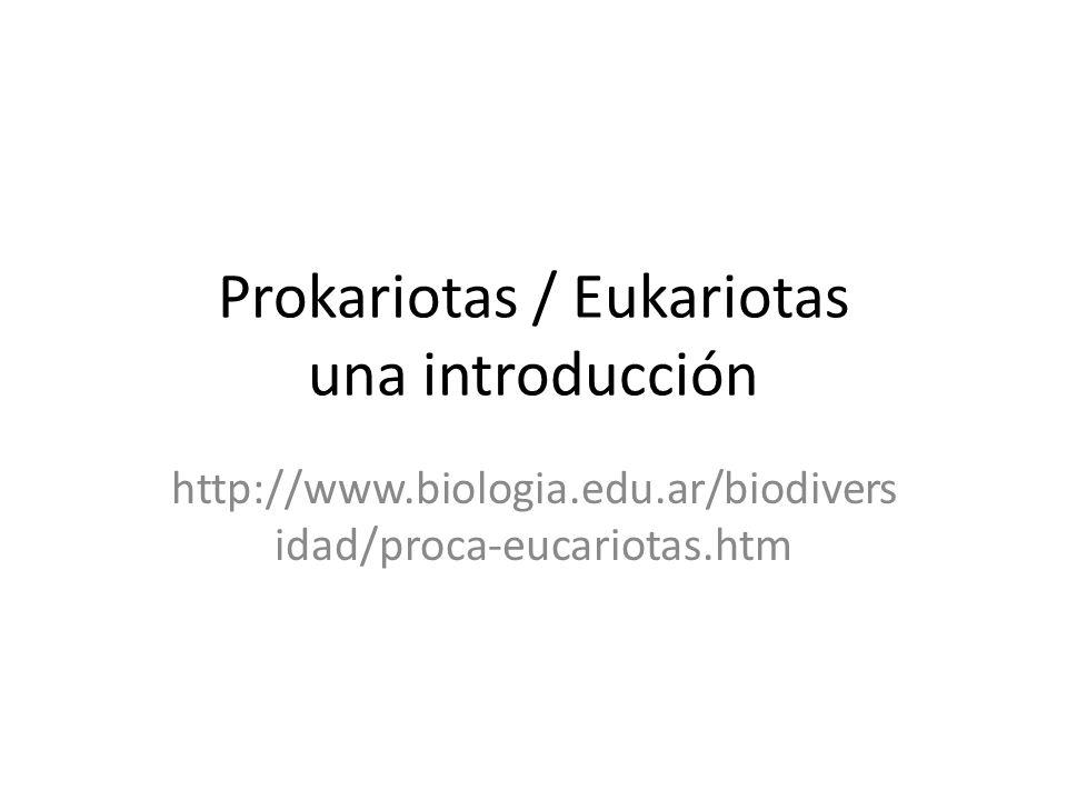 Prokariotas / Eukariotas una introducción