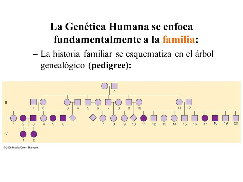 La Genética Humana se enfoca fundamentalmente a la familia:
