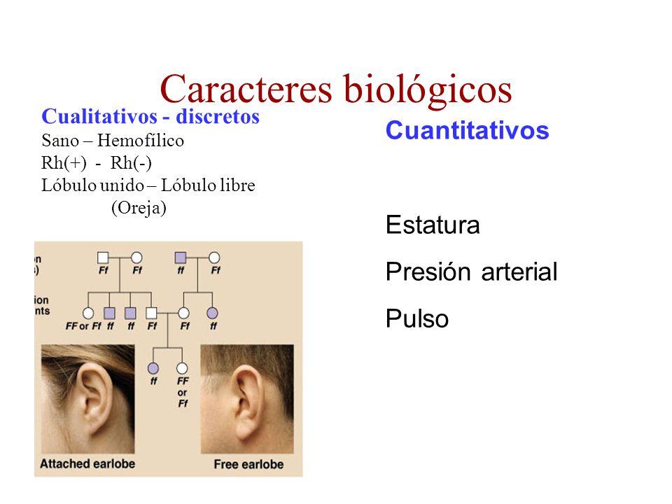Caracteres biológicos