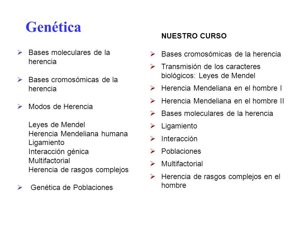 Genética NUESTRO CURSO Bases cromosómicas de la herencia