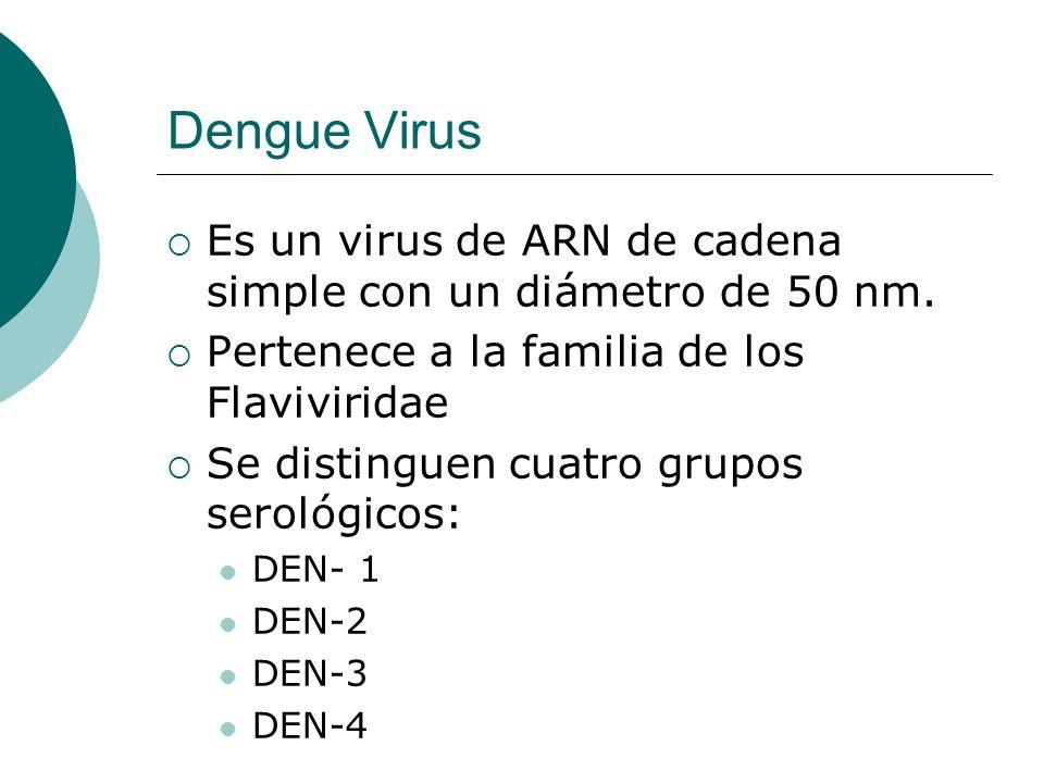 Dengue VirusEs un virus de ARN de cadena simple con un diámetro de 50 nm. Pertenece a la familia de los Flaviviridae.