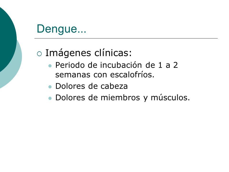 Dengue... Imágenes clínicas: