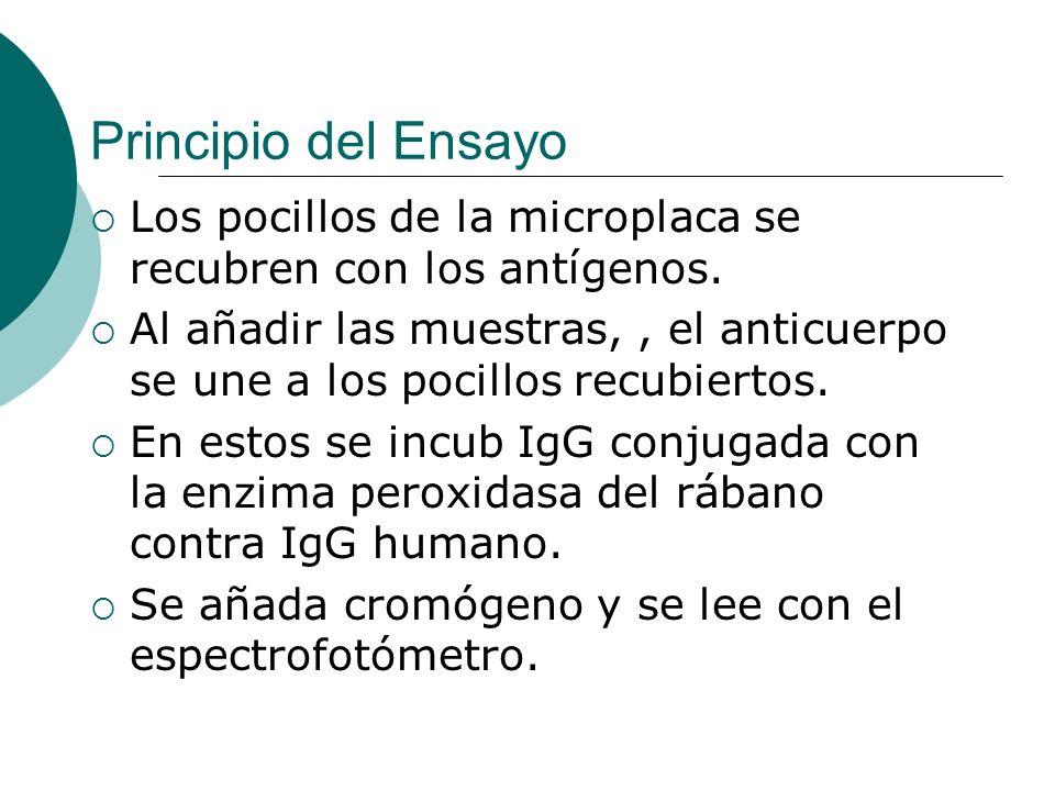 Principio del EnsayoLos pocillos de la microplaca se recubren con los antígenos.