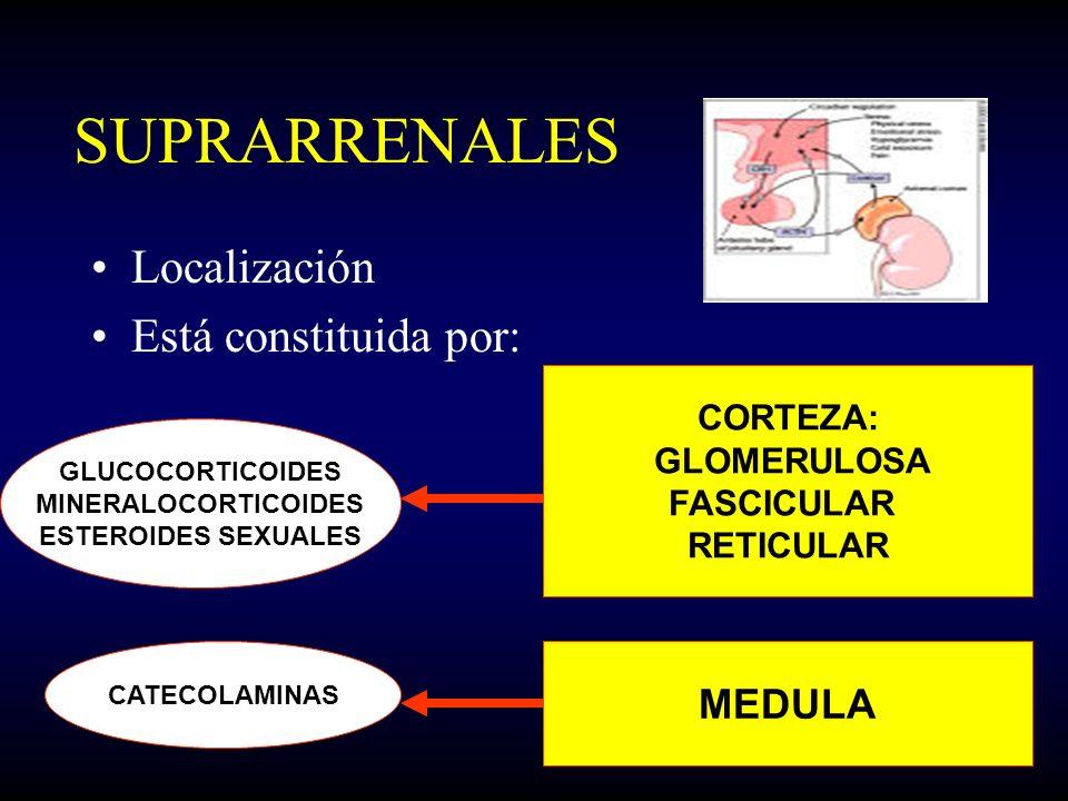 SUPRARRENALES Localización Está constituida por: MEDULA CORTEZA: