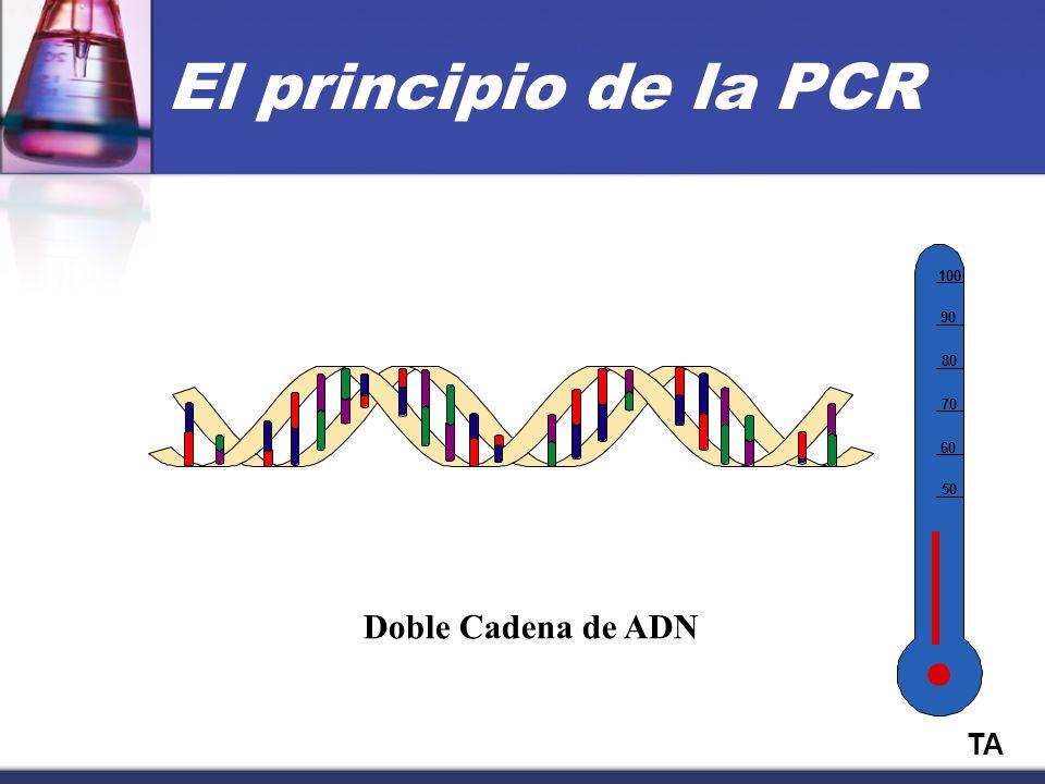El principio de la PCR 50 60 70 80 90 100 Doble Cadena de ADN TA