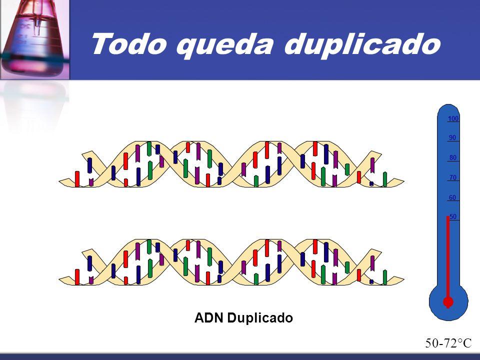 Todo queda duplicado 50 60 70 80 90 100 ADN Duplicado 50-72°C