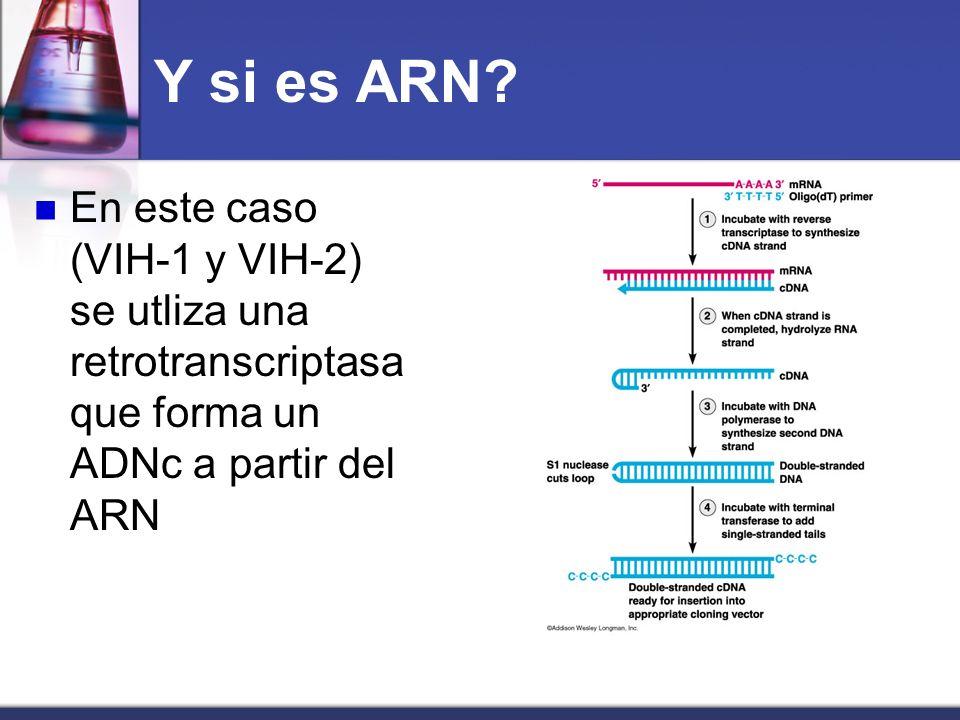 Y si es ARN.