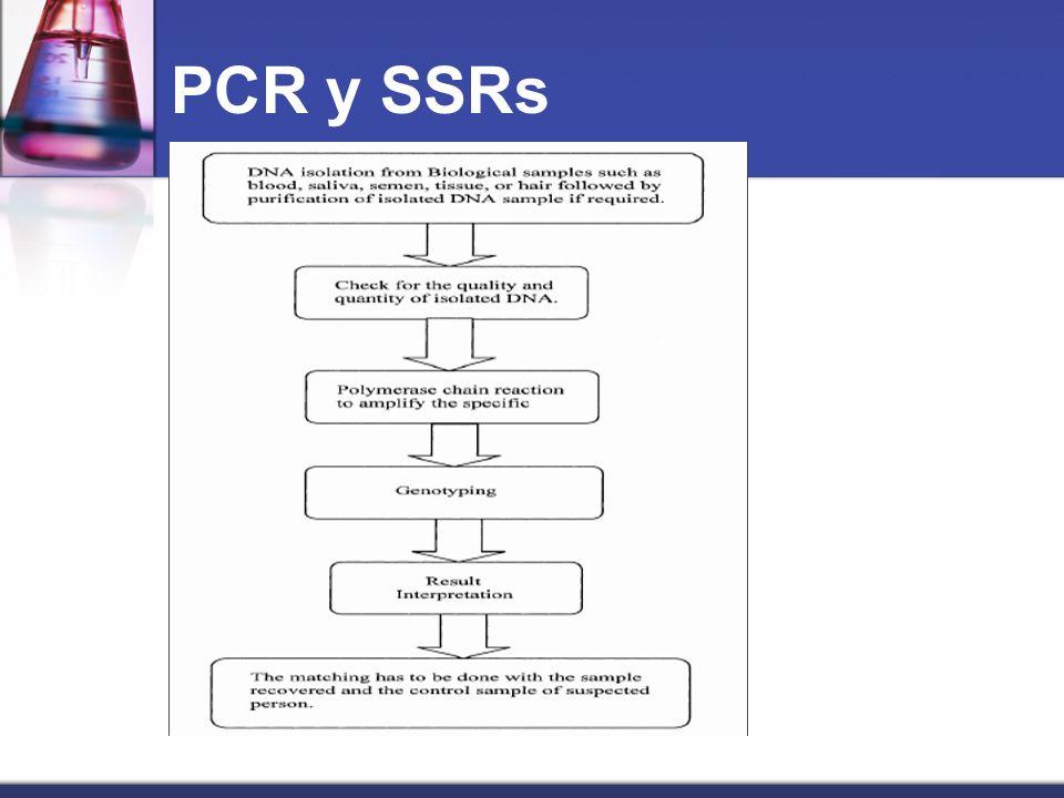 PCR y SSRs