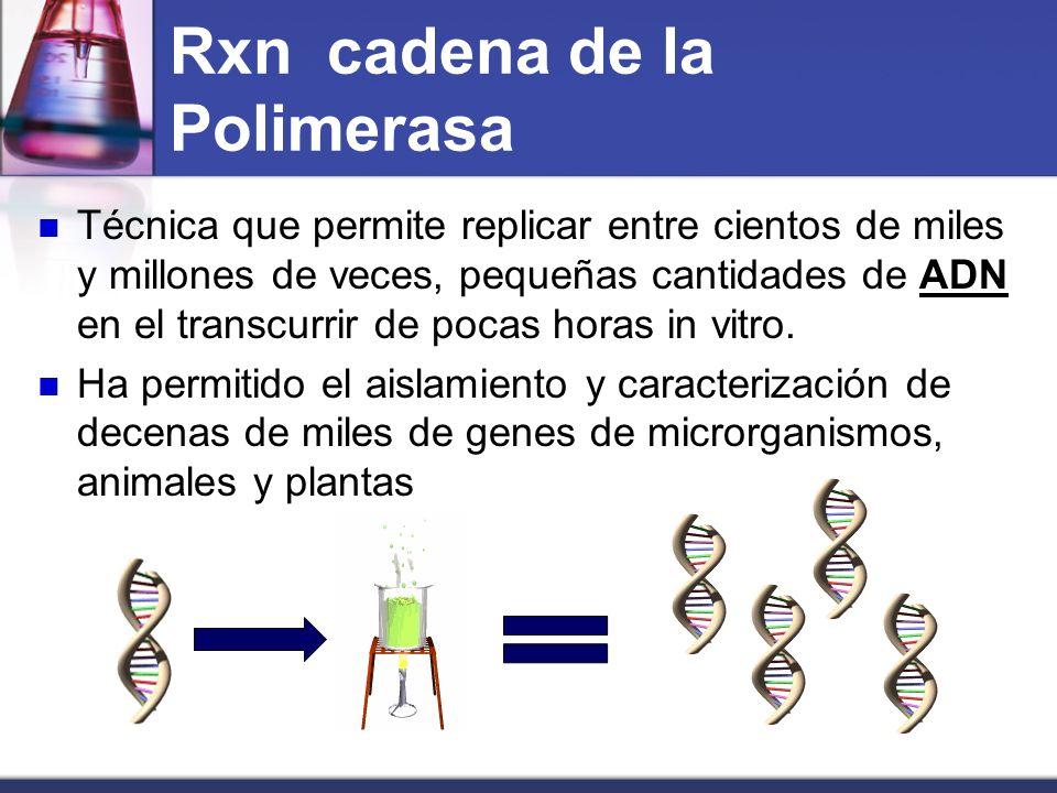 Rxn cadena de la Polimerasa
