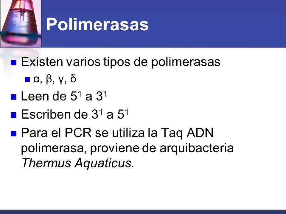 Polimerasas Existen varios tipos de polimerasas Leen de 51 a 31