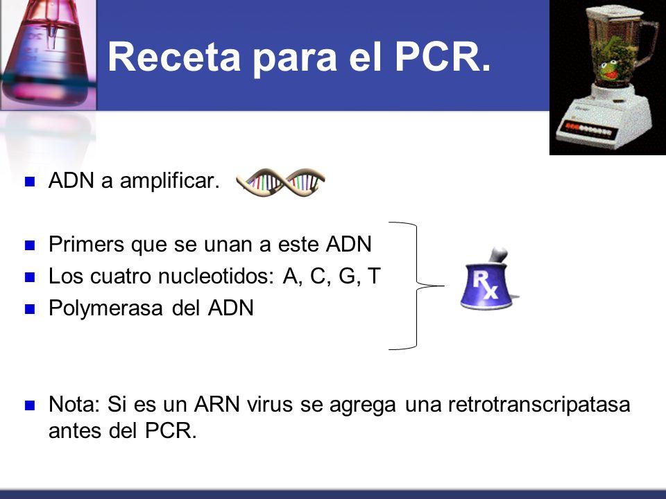 Receta para el PCR. ADN a amplificar. Primers que se unan a este ADN