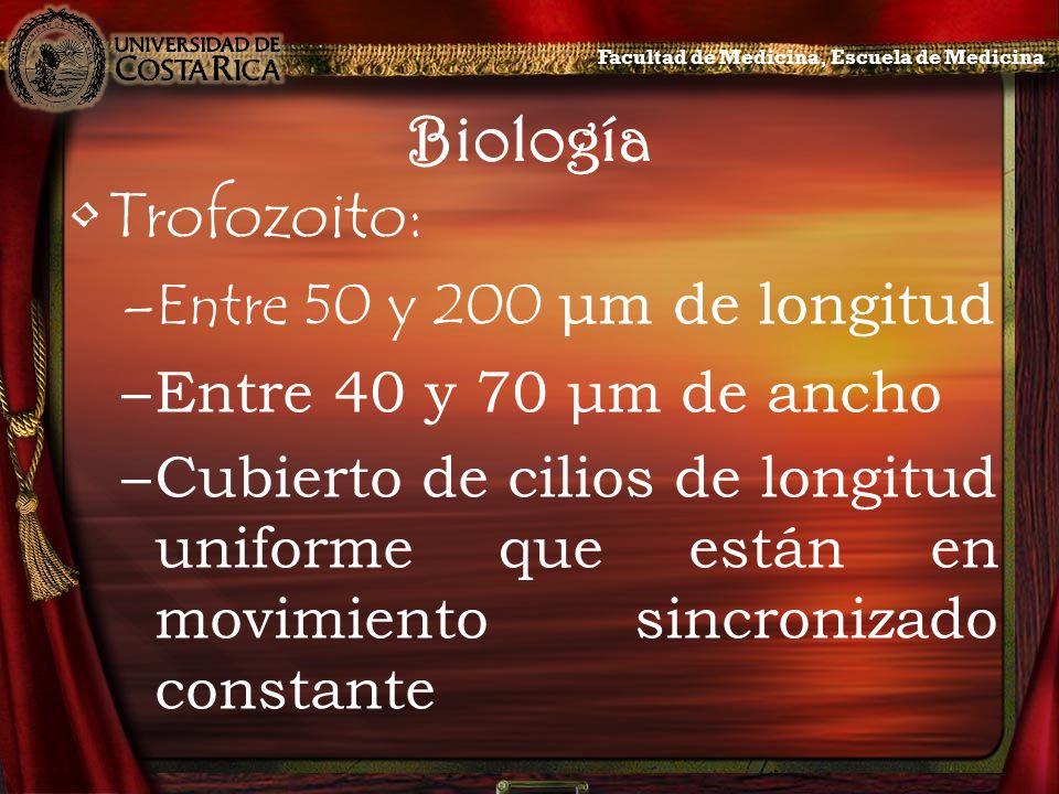 Biología Trofozoito: Entre 50 y 200 μm de longitud