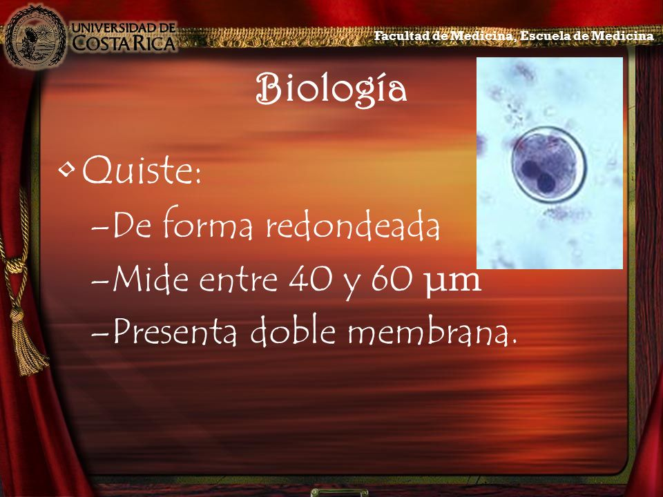 Biología Quiste: De forma redondeada Mide entre 40 y 60 μm
