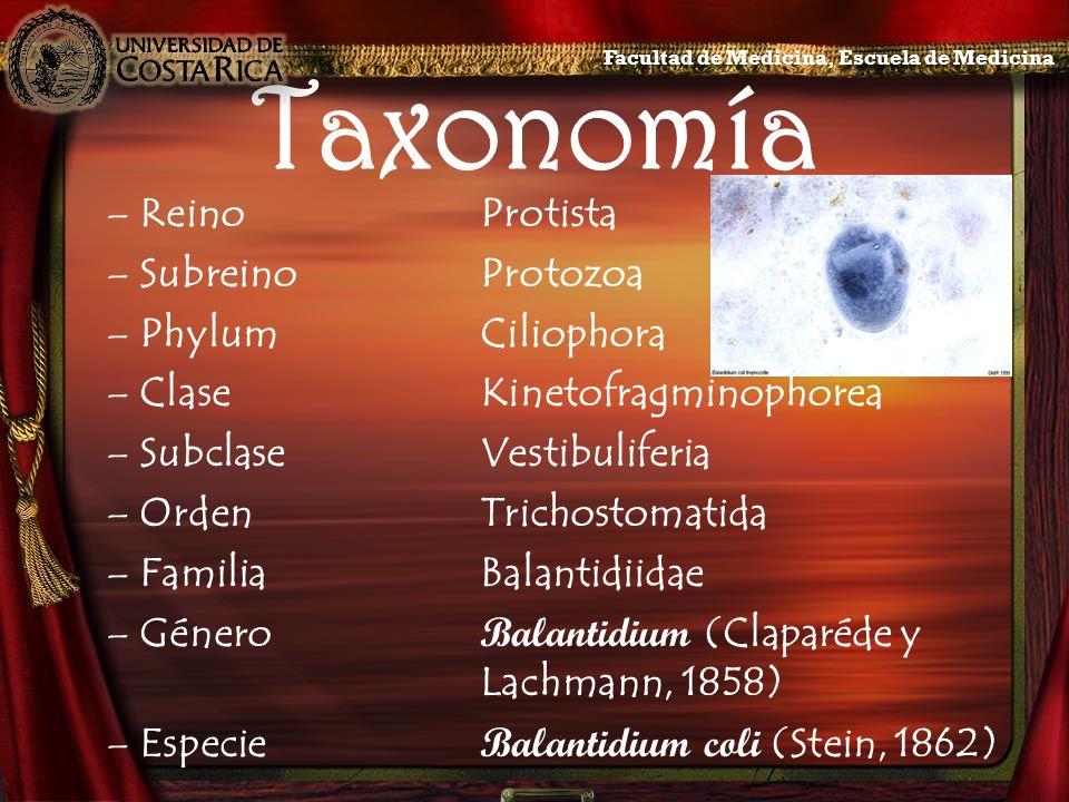 Taxonomía Reino Protista Subreino Protozoa Phylum Ciliophora