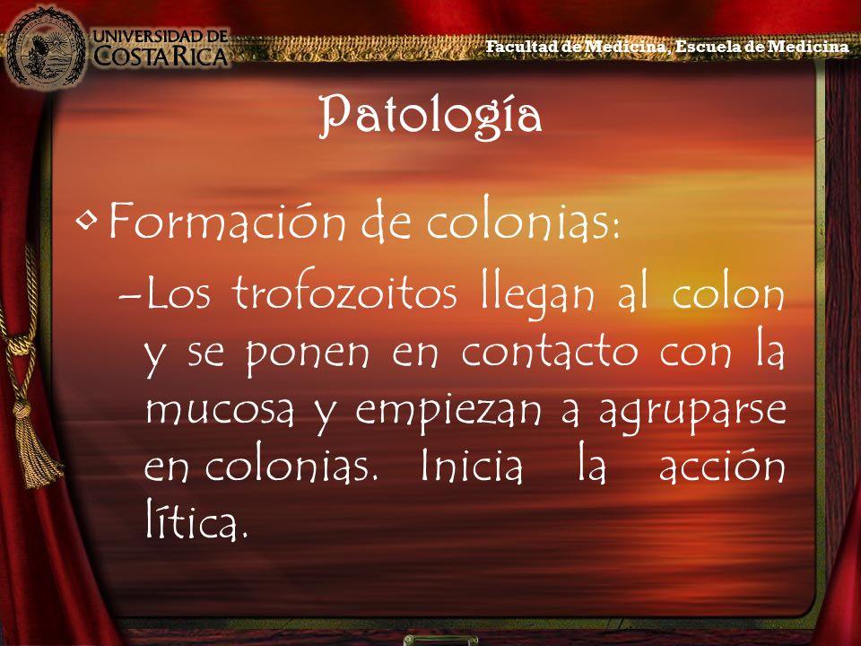 Formación de colonias: