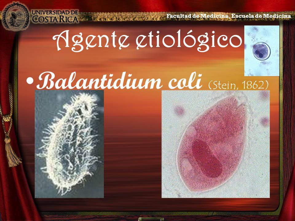 Balantidium coli (Stein, 1862)
