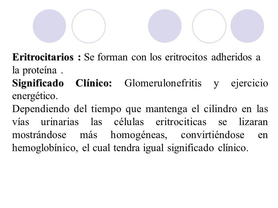 Eritrocitarios : Se forman con los eritrocitos adheridos a la proteína .