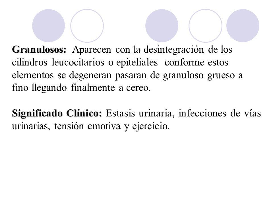 Granulosos: Aparecen con la desintegración de los cilindros leucocitarios o epiteliales conforme estos elementos se degeneran pasaran de granuloso grueso a fino llegando finalmente a cereo.