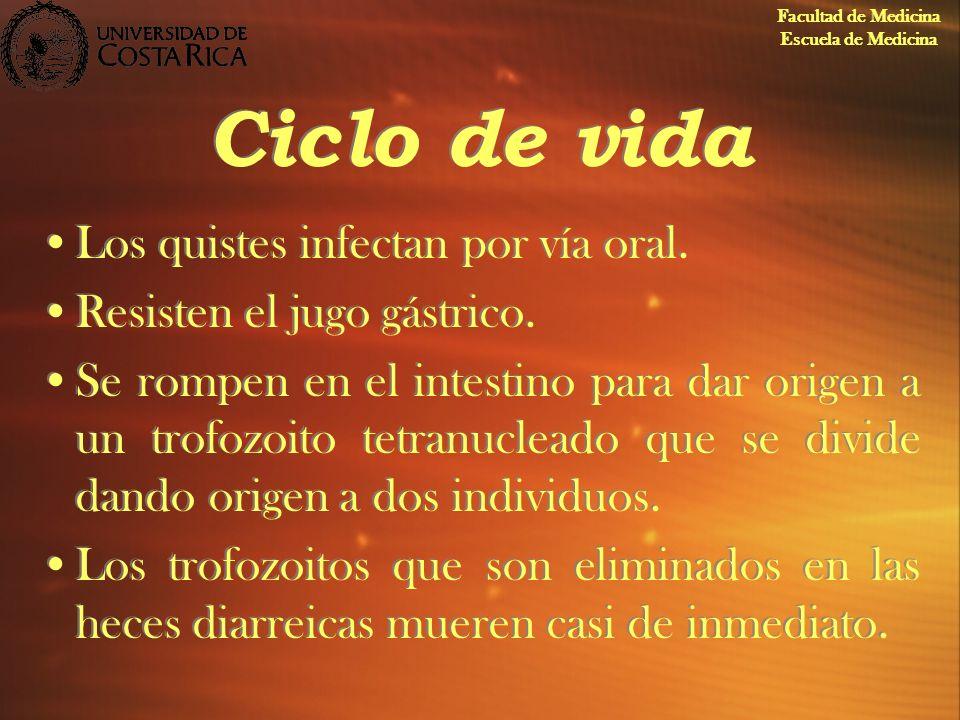 Ciclo de vida Los quistes infectan por vía oral.