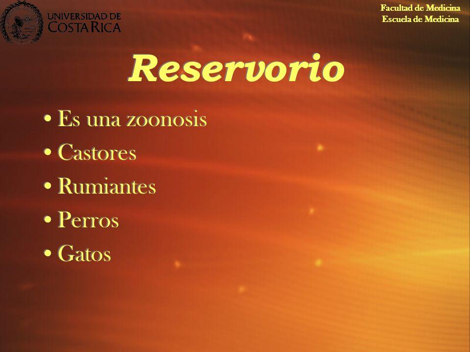 Reservorio Es una zoonosis Castores Rumiantes Perros Gatos