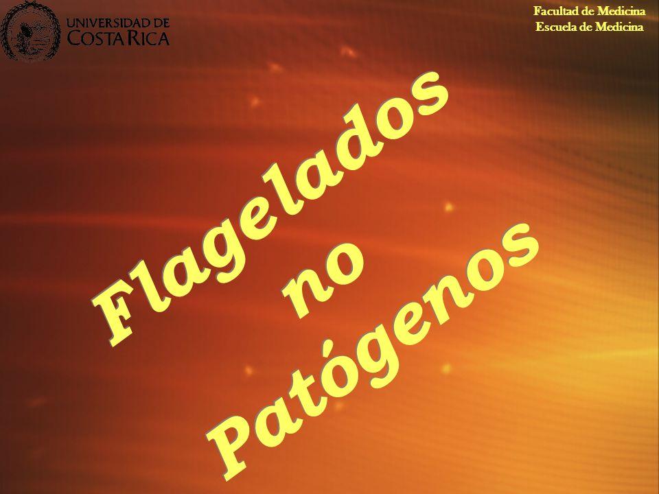 Flagelados no Patógenos