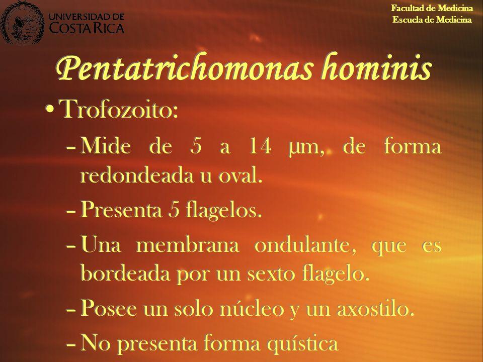 Pentatrichomonas hominis