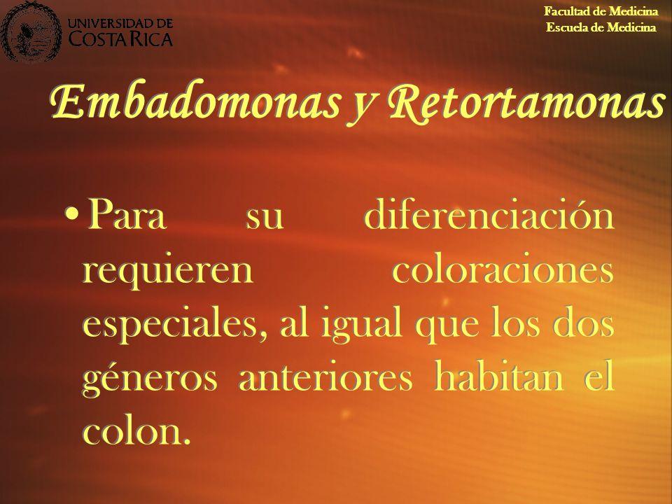 Embadomonas y Retortamonas