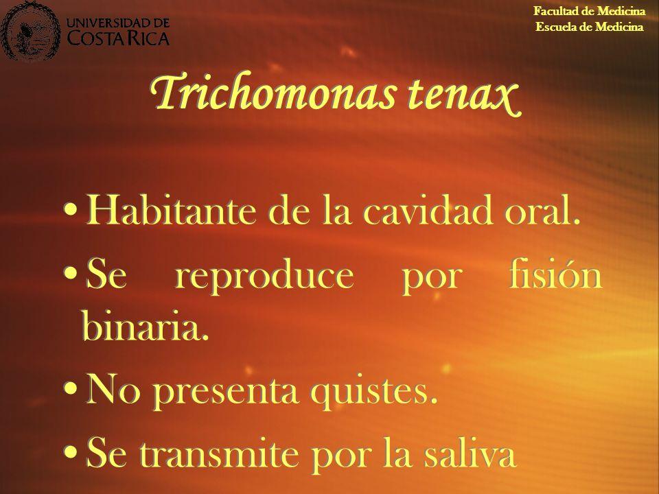 Trichomonas tenax Habitante de la cavidad oral.