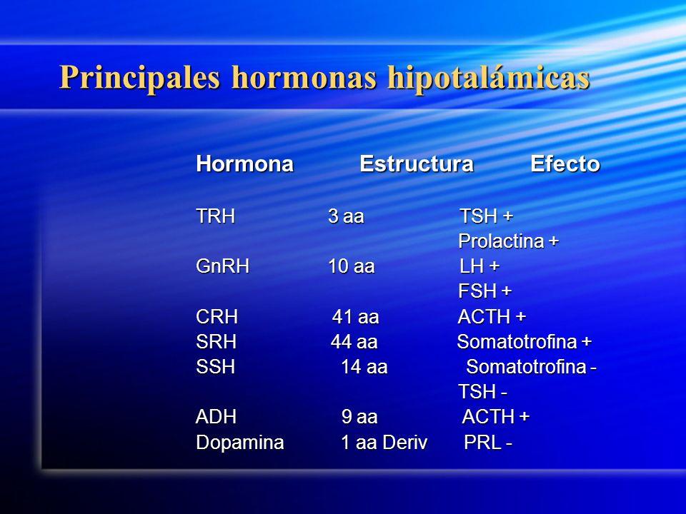 Principales hormonas hipotalámicas