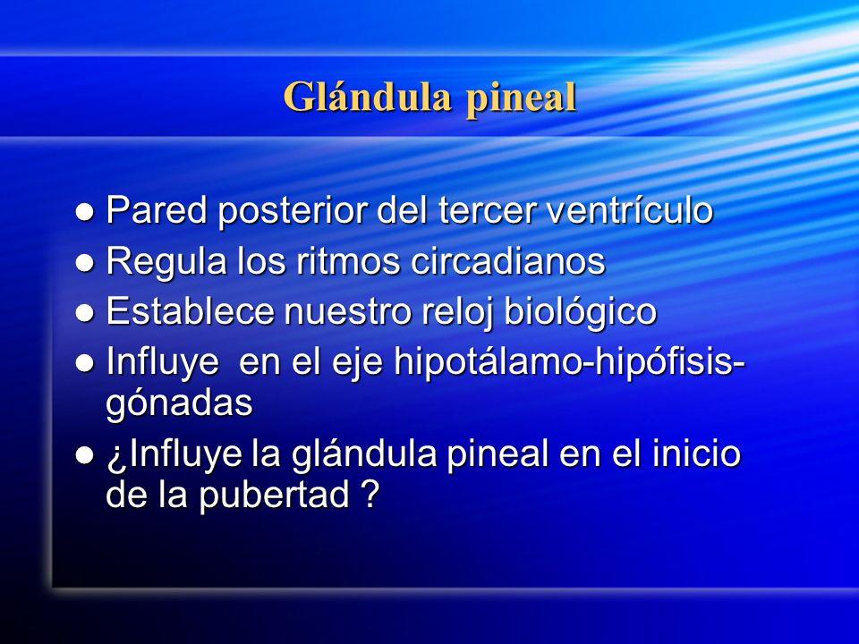 Glándula pineal Pared posterior del tercer ventrículo