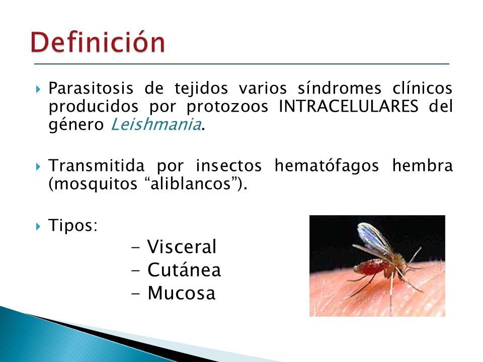 Definición - Cutánea - Mucosa