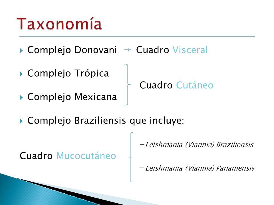 Taxonomía Complejo Donovani Cuadro Visceral Complejo Trópica
