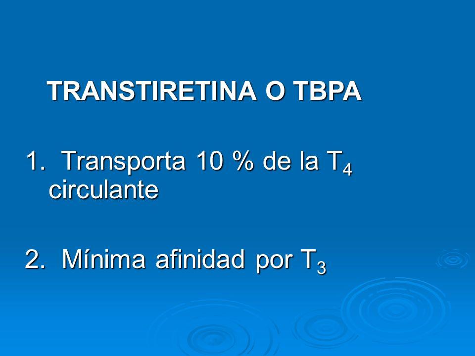 TRANSTIRETINA O TBPA 1. Transporta 10 % de la T4 circulante 2. Mínima afinidad por T3