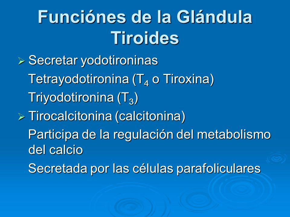 Funciónes de la Glándula Tiroides
