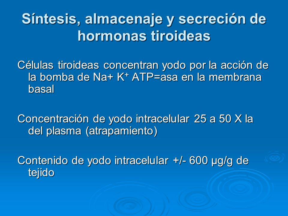 Síntesis, almacenaje y secreción de hormonas tiroideas