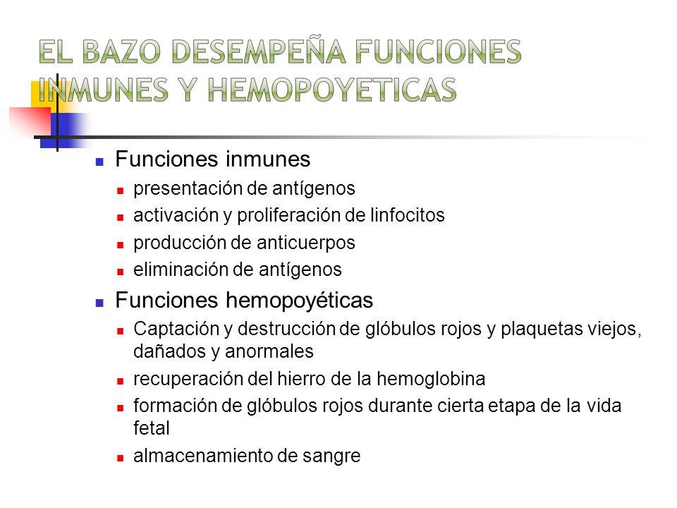 Funciones hemopoyéticas