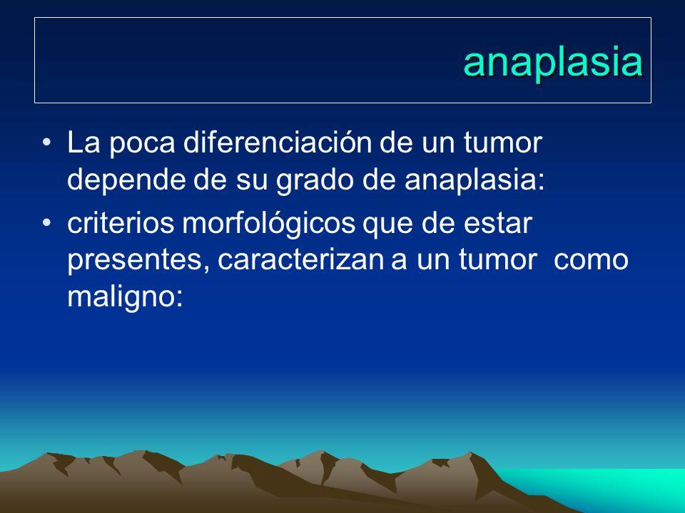 anaplasiaLa poca diferenciación de un tumor depende de su grado de anaplasia: