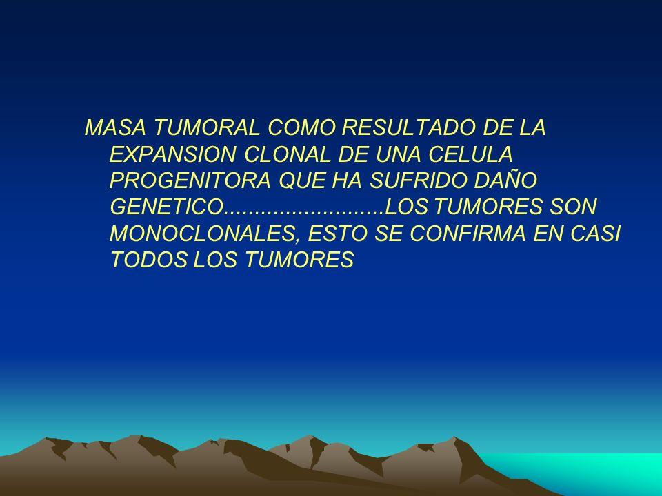 MASA TUMORAL COMO RESULTADO DE LA EXPANSION CLONAL DE UNA CELULA PROGENITORA QUE HA SUFRIDO DAÑO GENETICO..........................LOS TUMORES SON MONOCLONALES, ESTO SE CONFIRMA EN CASI TODOS LOS TUMORES